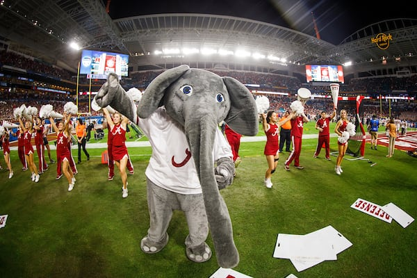 Big Al and the Alabama cheerleaders perform at the Orange Bowl