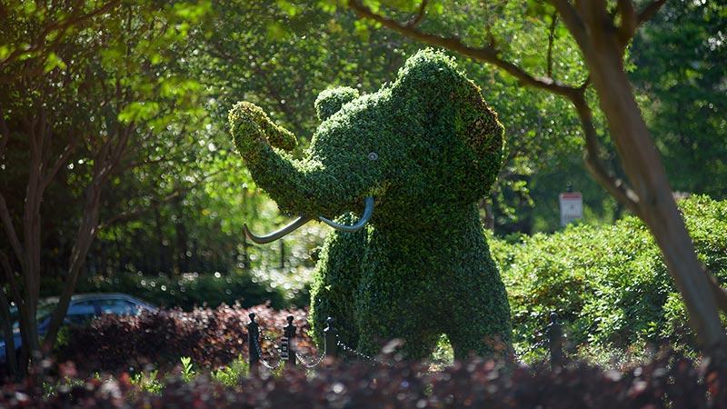 Elephant topiary on campus