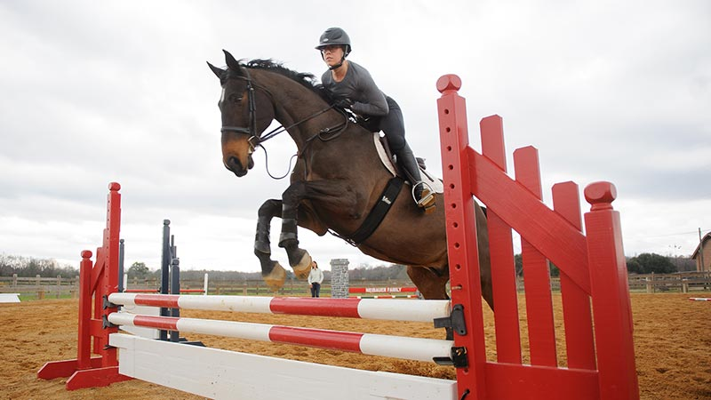 A horse and rider jumping